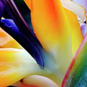 A Close-up Of A Flower Of A Bird Of Art Print