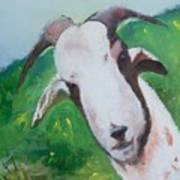 A Goat To Love Art Print