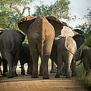 A Herd Of Elephants Heading Away From Us Art Print