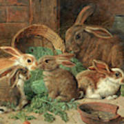A Mother Rabbit And Her Young Art Print