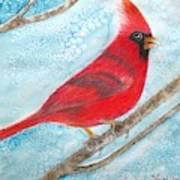 A Red Bird  Art Print