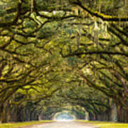 A Stunning, Long Path Lined With Art Print