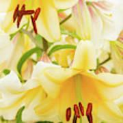 A Tower Of Lilies Art Print