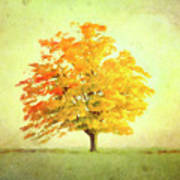 A Tree In Autumn Photograph By Hal Halli