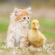 Adorable Red Kitten With Little Duckling Art Print