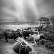 After The Rain On The Mountain In Black And White Art Print