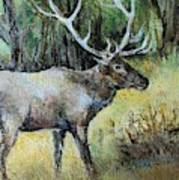 Alaska Elk Art Print