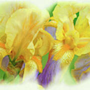 Amenti Yellow Iris Flowers Art Print