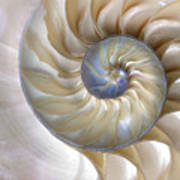 An Amazing Fibonacci Pattern In A Art Print
