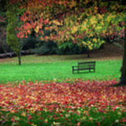 An Autumn Bench At Clyne Gardens Art Print