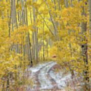 An Autumn Path Art Print