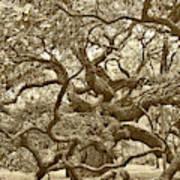 Angel Oak Drama In Vintage Sepia Art Print