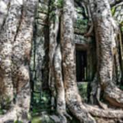 Angkor Roots Art Print