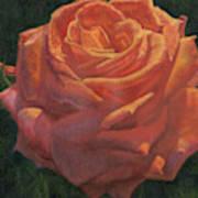 Anniversary Rose Art Print