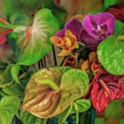 Anthurium Riot Art Print