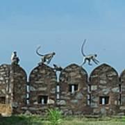 Apes Playing At Kumbhalgarh Art Print