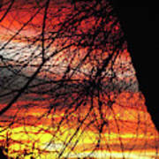 Arizona Sunset Through Branches Art Print