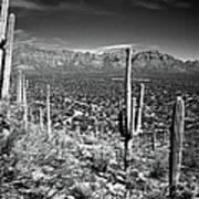 Arizona, Tucson, Saguaro Np, Brown Art Print