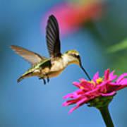 Art Of Hummingbird Flight Art Print