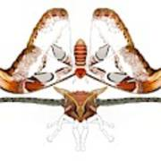 Atlas Moth2 Art Print