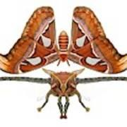 Atlas Moth5 Art Print