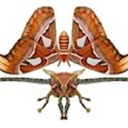 Atlas Moth7 Art Print