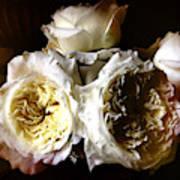 Austin Roses Notan Art Print