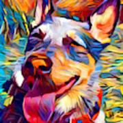 Australian Cattle Dog 2 Art Print