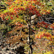 Autumn Color In Smoky Mountains National Park Art Print