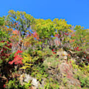 Autumn Color On Newfound Gap Road In Smoky Mountains National Park Art Print