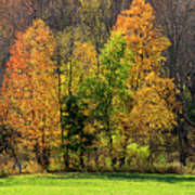 Autumn Colour In Southern Ontario Art Print
