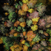 Autumn Forest - Aerial Photography Art Print