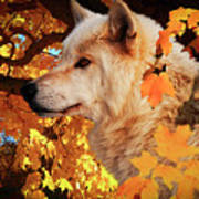 Autumn Leaves And Wolf Art Print