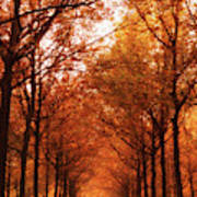 Autumn Lights At Groeneveld Art Print