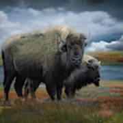 Autumn Plains Bison Art Print