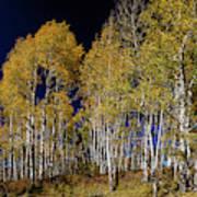Autumn Walk In The Woods Art Print