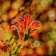 Autumn's Glow 2 Art Print