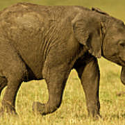 Baby Elephant Following The Herd On The Art Print