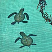 Baby Sea Turtles Art Print