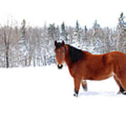Bay Horse Standing Alone In Deep Snow Art Print