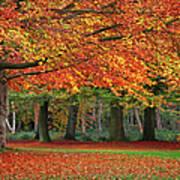 Beautiful Autumn In Park Art Print