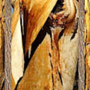 Beautiful Bark  Art Print
