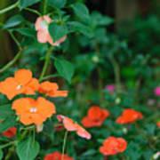 Beautiful Orange Flower, Naturally Art Print