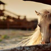 Beautiful, Quiet, White Horse Waits In Art Print