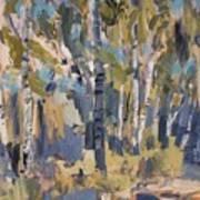 Birch Trees Along The Pond De Melle Art Print