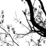 Bird in Tree Kingston Point Park Art Print