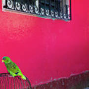 Bird On Cage Art Print