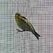 Bird Watching Reversed Art Print