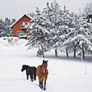 Black And Brown Horse Art Print