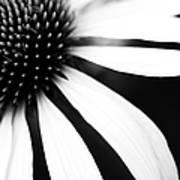 Black And White Flower Maco Art Print